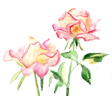 flower drawings: Beautiful Roses flowers, Watercolor painting