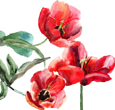 Beautiful Tulips flowers, Watercolor painting  photo