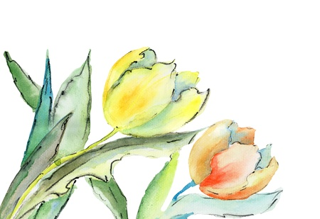 tulips: Tulips flowers, watercolor illustration Stock Photo