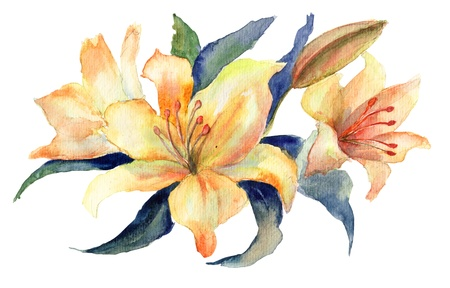lily leaf: Three yellow Lily flowers, watercolor illustration  Stock Photo