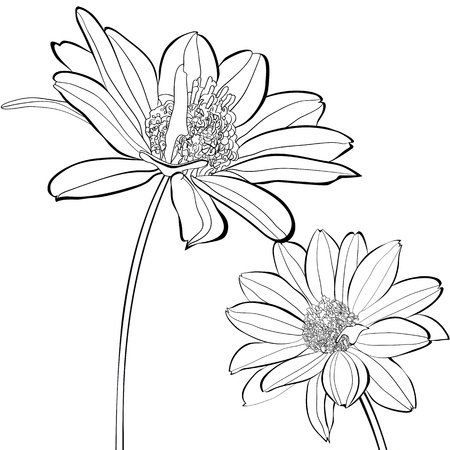 gerber flowers: Template for card with Gerber flowers