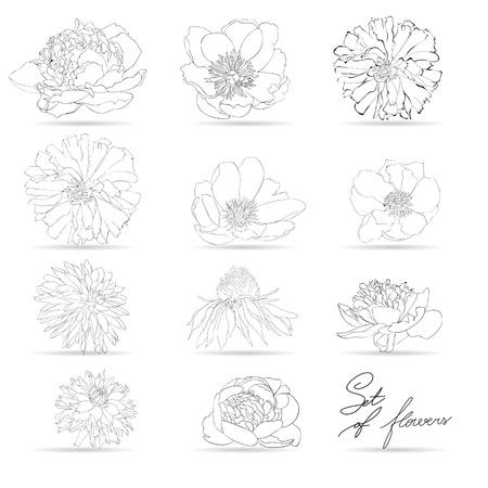 dalia: Conjunto de flores, ilustración monocromática