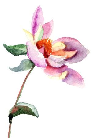 dalia: Dahlia flor, ilustraci�n acuarela Foto de archivo
