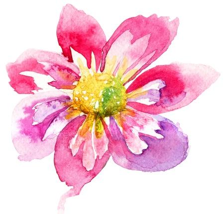 Hermosa flor rosa, Pintura de la acuarela Foto de archivo