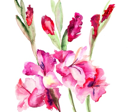 Beautiful Gladiole  flowers, Watercolor painting  Stock Photo - 15810852