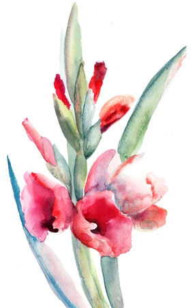 gladiolus: Beautiful Gladiolus flowers, Watercolor painting