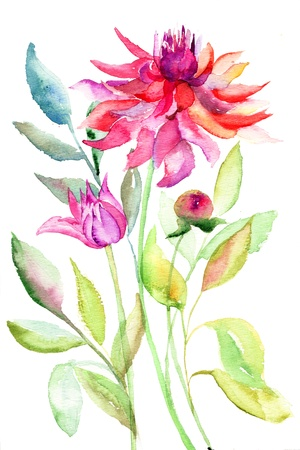 dahlia: Dahlia flower, watercolor illustration  Stock Photo