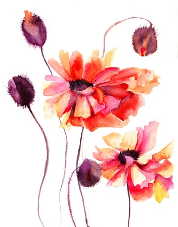 watercolor flower: Beautiful Poppy flowers, Watercolor painting