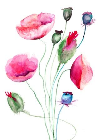 Fleurs de pavot, illustration aquarelle Banque d'images