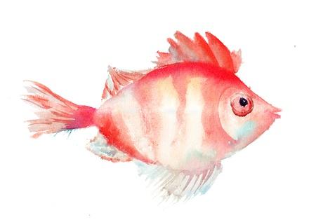 toy fish: Watecolor fish illustration