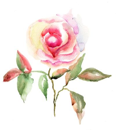 watercolour painting: Beautiful Roses flowers, Watercolor painting