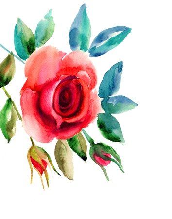Original Rose flowers illustration, watercolor painting Stock Illustration - 15810857