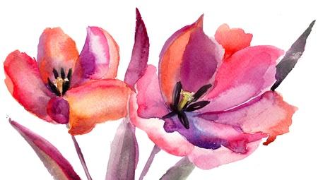 튤립 꽃, 수채화 그림 스톡 콘텐츠