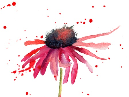 watercolor flower: Summer flowers, watercolor flowers