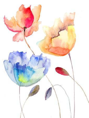 poppy flowers: Beautiful summer flowers, watercolor illustration Stock Photo