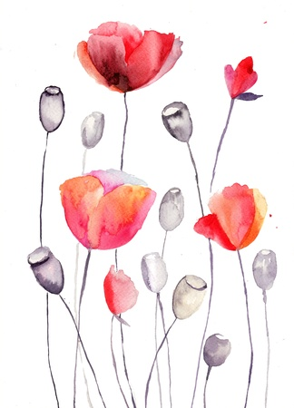 poppy flowers: Stylized Poppy flowers illustration