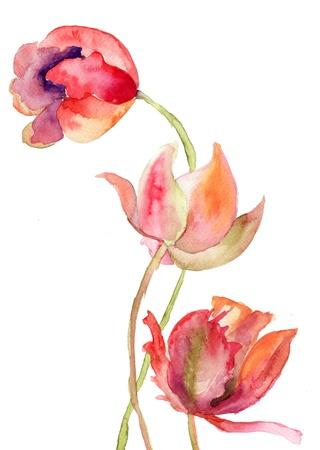 Three Tulips flowers Stock Photo