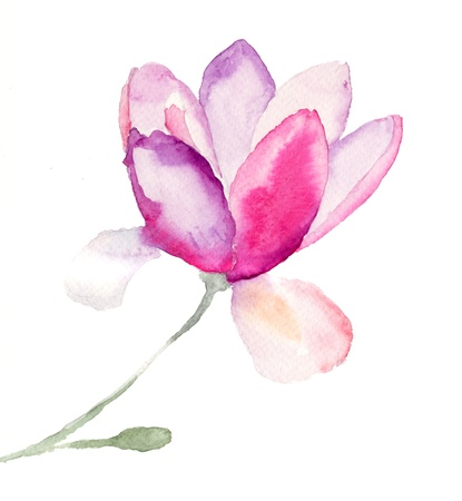 a bud: Magnolia, watercolor illustration