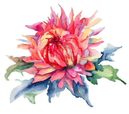crisantemos: Acuarela ilustraci�n con flores hermosas Foto de archivo