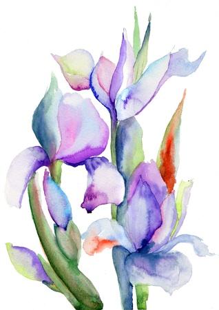 iris fiore: Iris fiori, illustrazione acquerello Archivio Fotografico