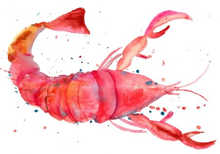 lobster: Watercolor illustration of lobster Stock Photo