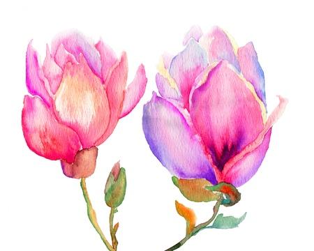 Beautiful Magnolia flowers, watercolor illustration