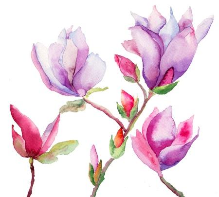 美しいモクレンの花、水彩イラスト