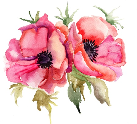 botanical branch: Stylized Poppy flowers illustration