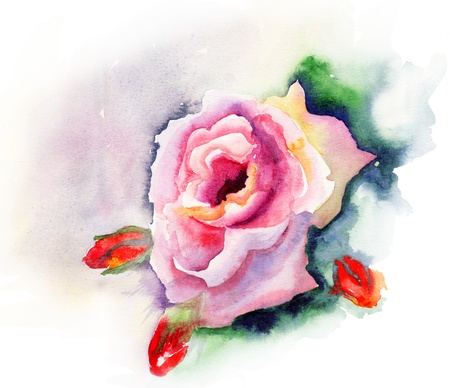 Rose flower, watercolor illustration illustration