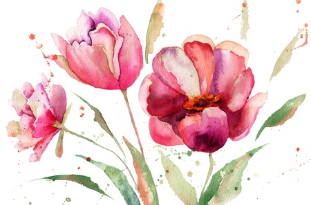 tulip  flower: Three Tulips flowers, watercolor illustration  Stock Photo