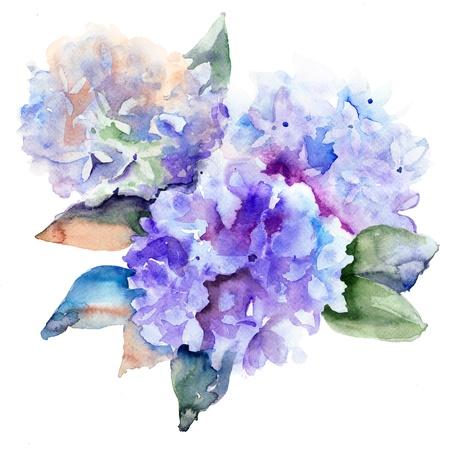 Beautiful Hydrangea blue flowers, watercolor illustration  Stock Photo