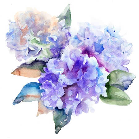 watercolor background: Beautiful Hydrangea blue flowers, watercolor illustration  Stock Photo