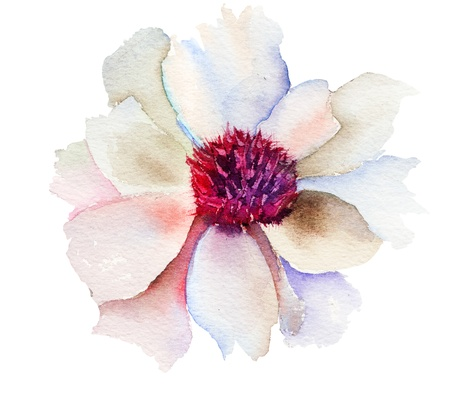 watercolor flower: The Bud of white flower, Watercolor painting