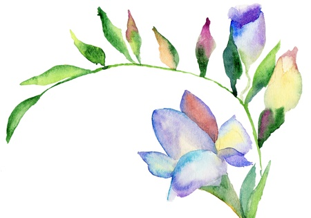 sweet pea: Freesia flowers, watercolor illustration