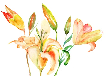 lily flowers: Flores amarillas del lirio, ilustraci�n acuarela