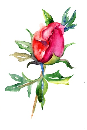 Blossom of Peony flower, Watercolor painting  photo
