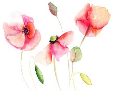 watercolour painting: Beautiful Poppy flowers, Watercolor painting