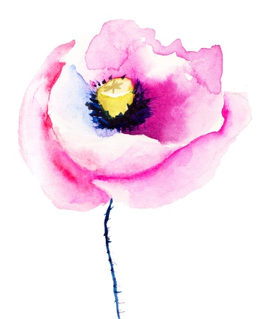 Colorful pink poppy flowers, watercolor illustration  Stock Photo
