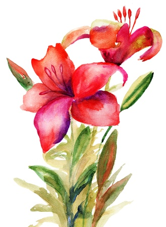 Beautiful Lily flowers, watercolor illystration Stock Photo