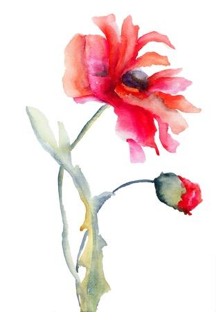 Red Poppy flower, watercolor illustration