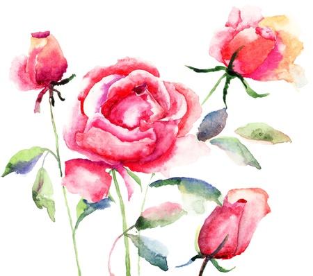 Rose flower, watercolor illustration  Stock Photo
