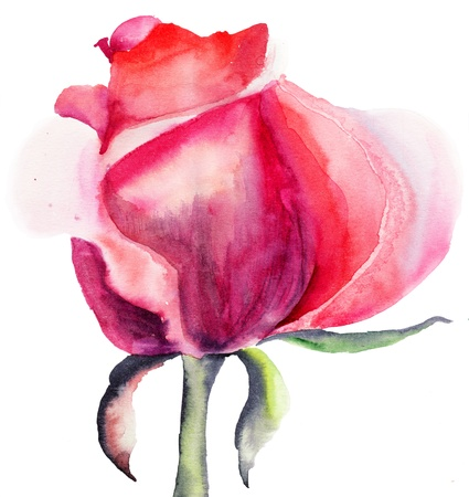 Beautiful Rose flower, watercolor illustration  Stock Photo