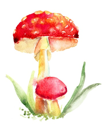 mushrooming: Mushrooms, watercolor illustration