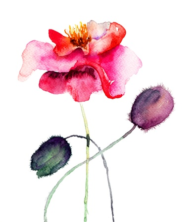 Colorful Red Poppy, watercolor illustration