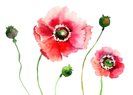 Stylized Poppy flowers illustration  Stock Illustration - 17273687