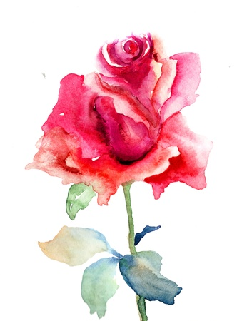 Red Rose flower, watercolor illustration  illustration