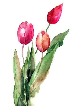 red tulip: Three Tulips flowers, watercolor illustration  Stock Photo