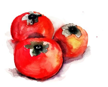 persimmon: Persimmon, watercolor illustration