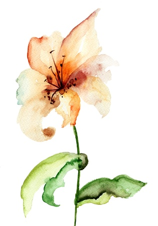 watercolor paper: Yellow Lily flower, watercolor illustration