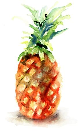 caribbean drink: Watercolor illustration of pineapple